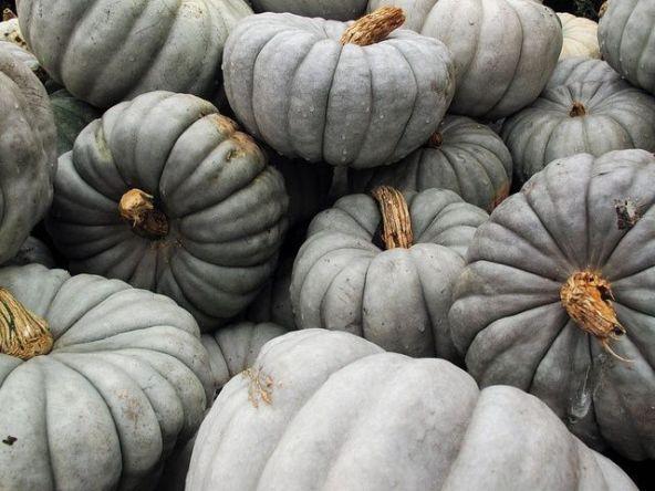 grey pumpkins